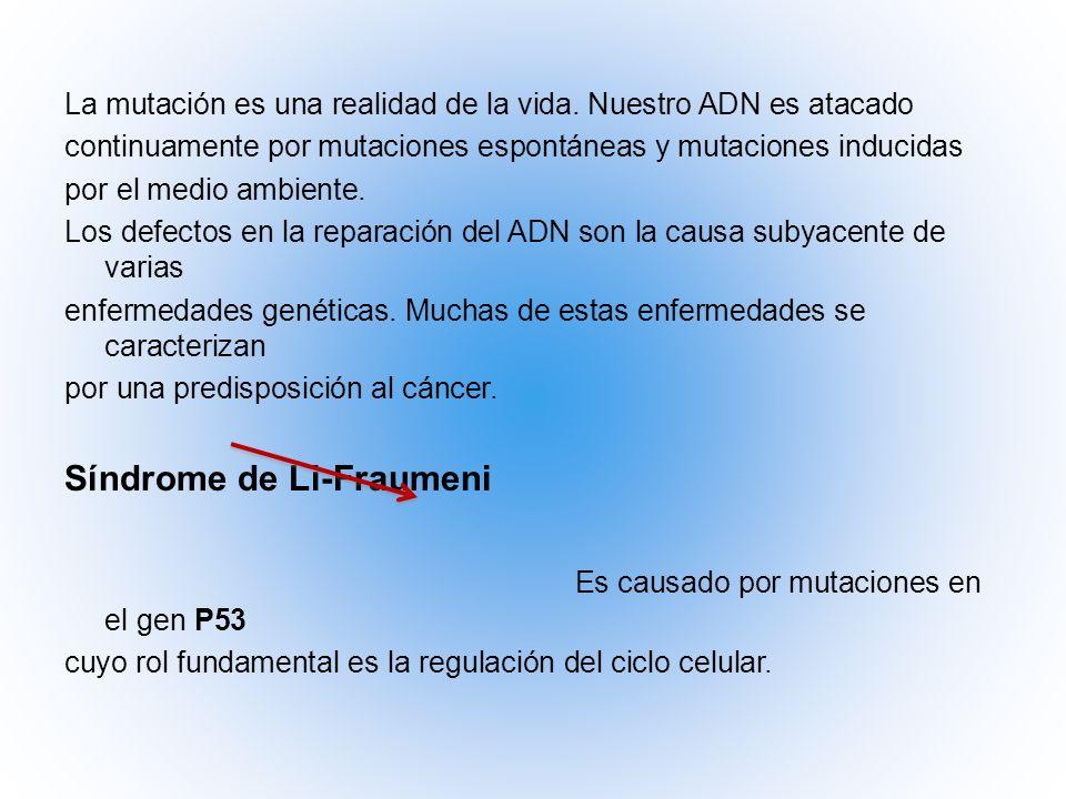 Síndrome de Li-Fraumeni Es causado por mutaciones en el gen P53