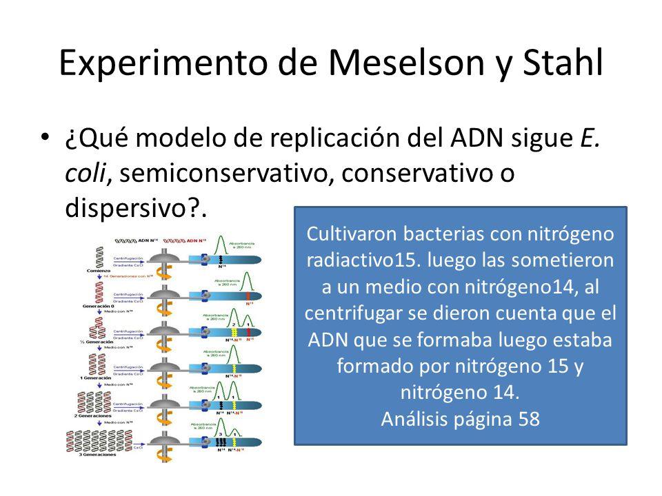 Experimento de Meselson y Stahl