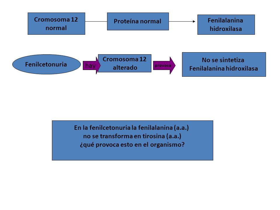 Fenilalanina hidroxilasa Fenilcetonuria Cromosoma 12 alterado hay