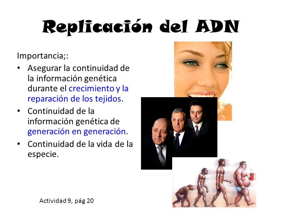Replicación del ADN Importancia;: