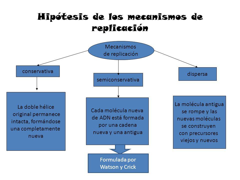 Hipótesis de los mecanismos de replicación