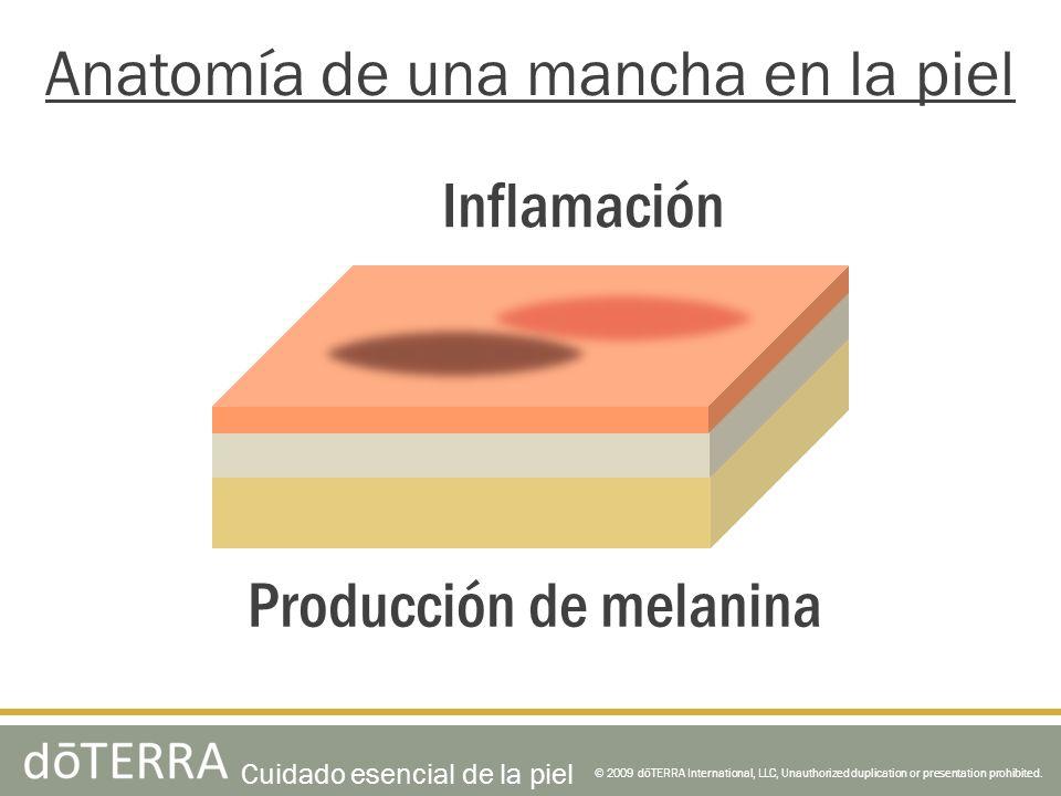 Anatomía de una mancha en la piel