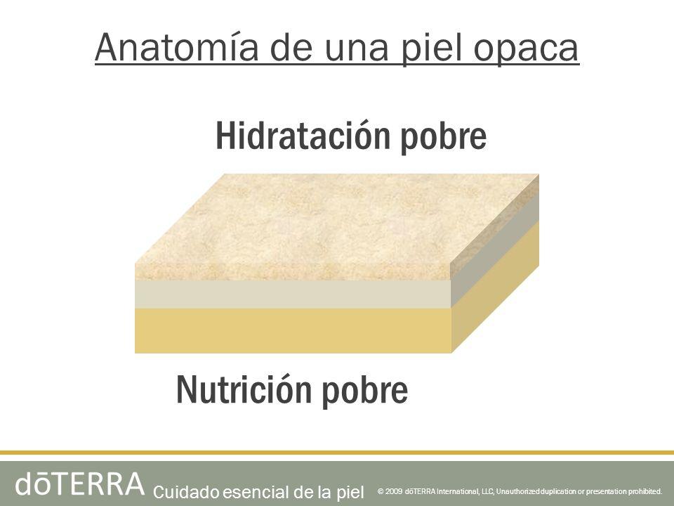 Anatomía de una piel opaca