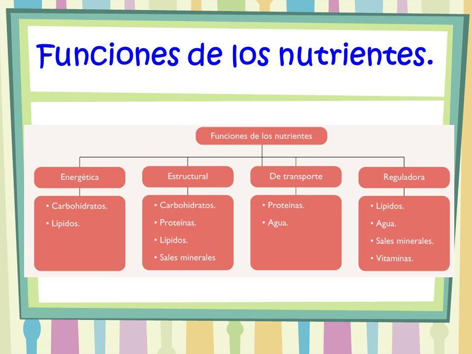 Funciones de los nutrientes.
