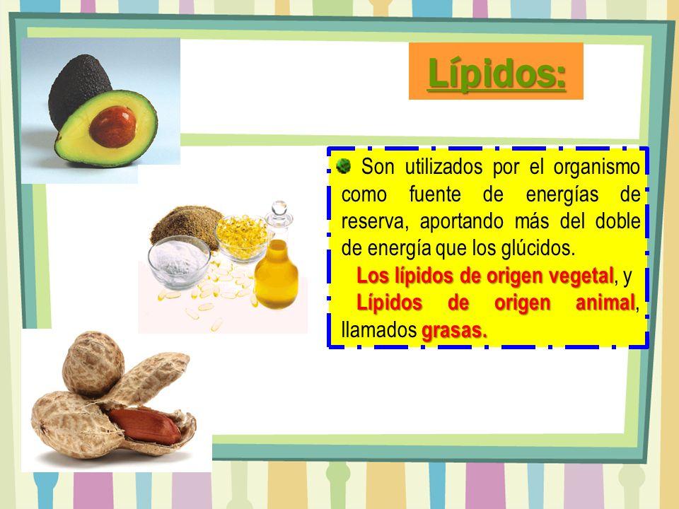 Lípidos: Son utilizados por el organismo como fuente de energías de reserva, aportando más del doble de energía que los glúcidos.