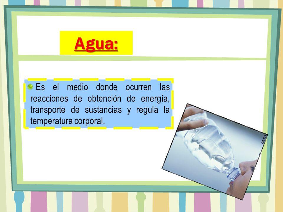 Agua: Es el medio donde ocurren las reacciones de obtención de energía, transporte de sustancias y regula la temperatura corporal.