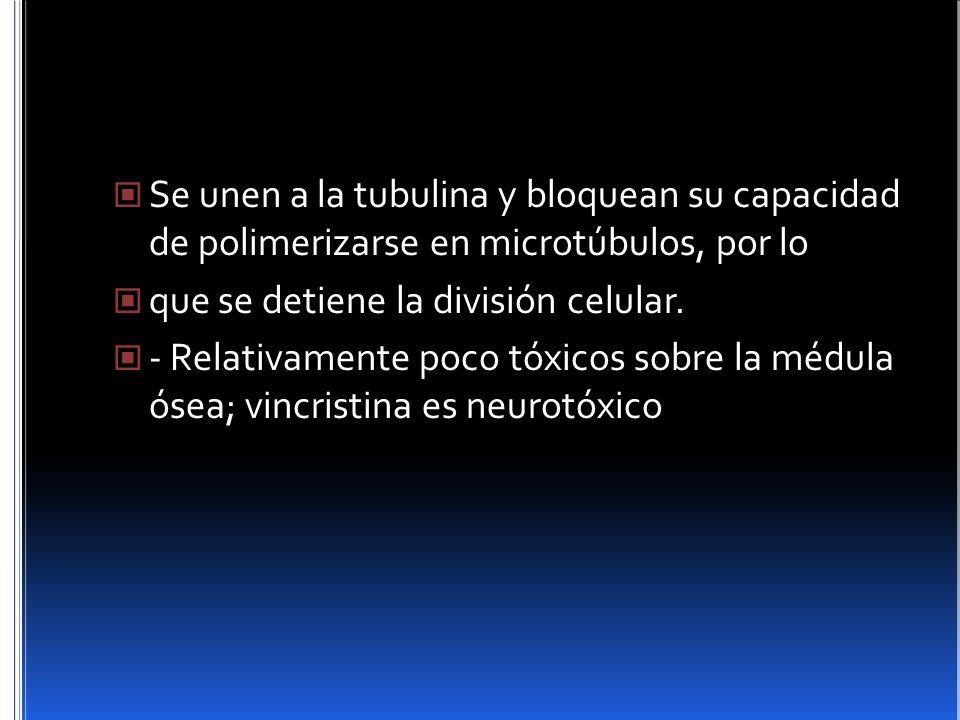 Se unen a la tubulina y bloquean su capacidad de polimerizarse en microtúbulos, por lo