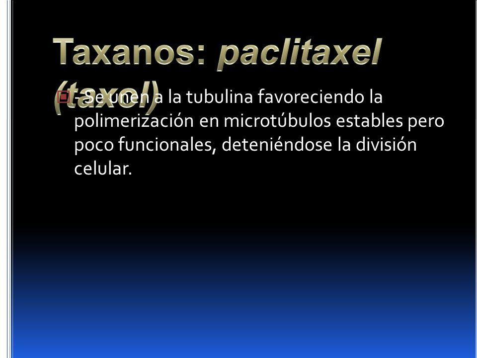 Taxanos: paclitaxel (taxol)