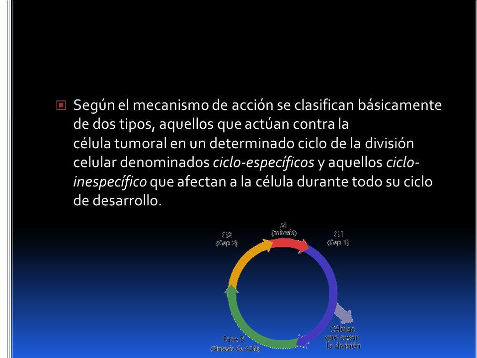 Según el mecanismo de acción se clasifican básicamente de dos tipos, aquellos que actúan contra la célula tumoral en un determinado ciclo de la división celular denominados ciclo-específicos y aquellos ciclo- inespecífico que afectan a la célula durante todo su ciclo de desarrollo.