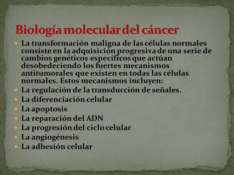 Biología molecular del cáncer