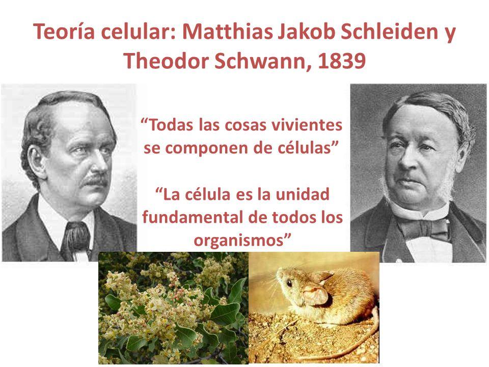 Teoría celular: Matthias Jakob Schleiden y Theodor Schwann, 1839