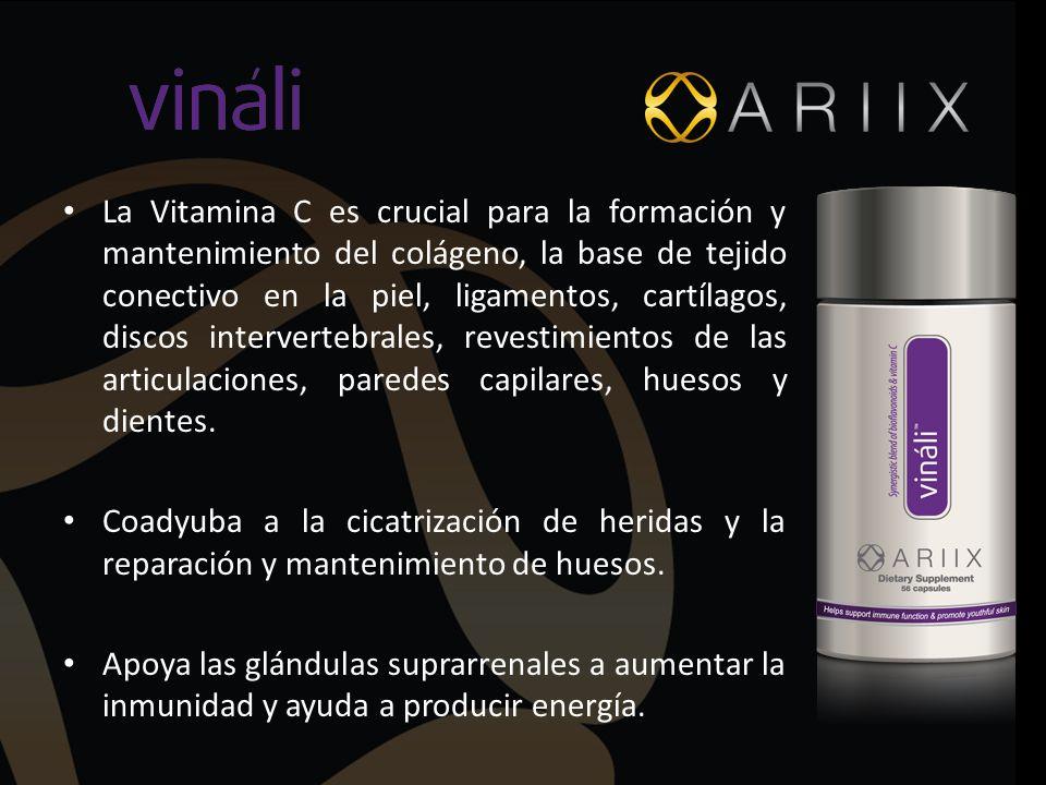La Vitamina C es crucial para la formación y mantenimiento del colágeno, la base de tejido conectivo en la piel, ligamentos, cartílagos, discos intervertebrales, revestimientos de las articulaciones, paredes capilares, huesos y dientes.