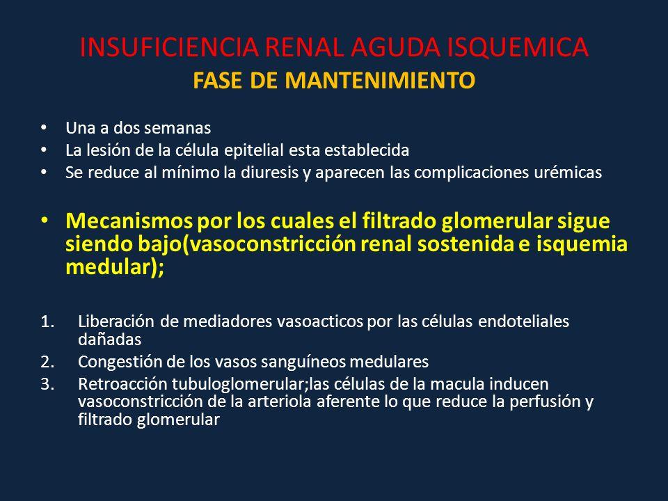 INSUFICIENCIA RENAL AGUDA ISQUEMICA FASE DE MANTENIMIENTO