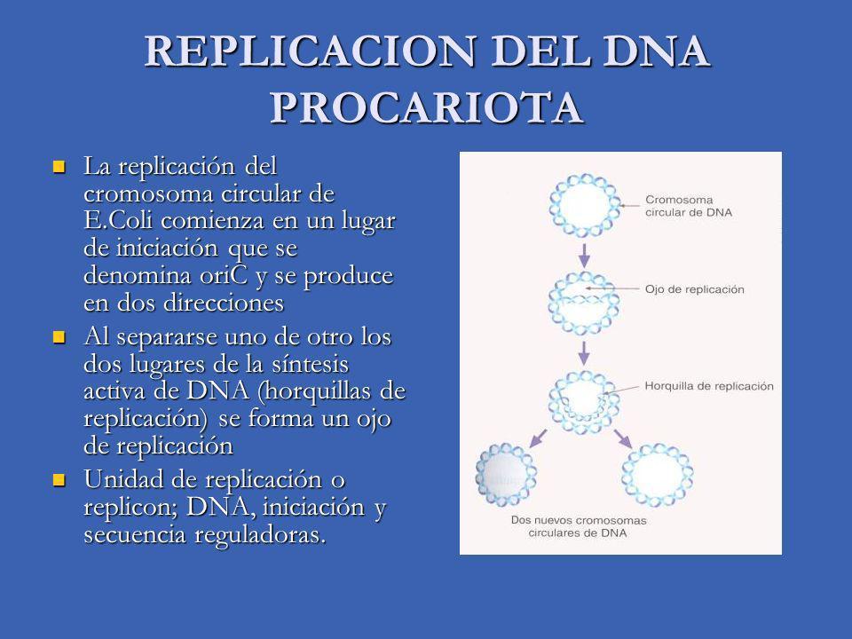 REPLICACION DEL DNA PROCARIOTA
