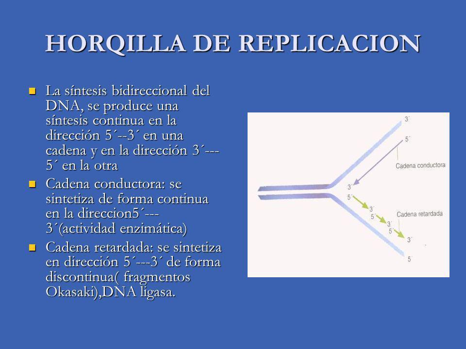 HORQILLA DE REPLICACION