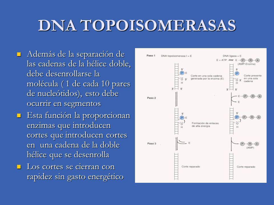 DNA TOPOISOMERASAS