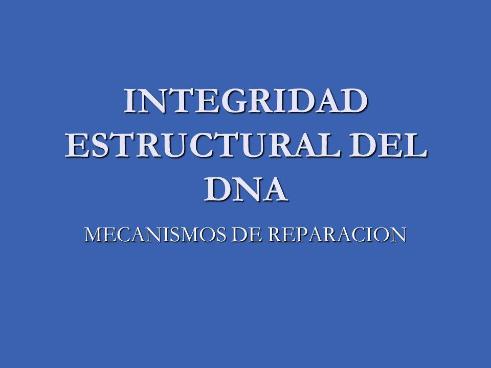 INTEGRIDAD ESTRUCTURAL DEL DNA