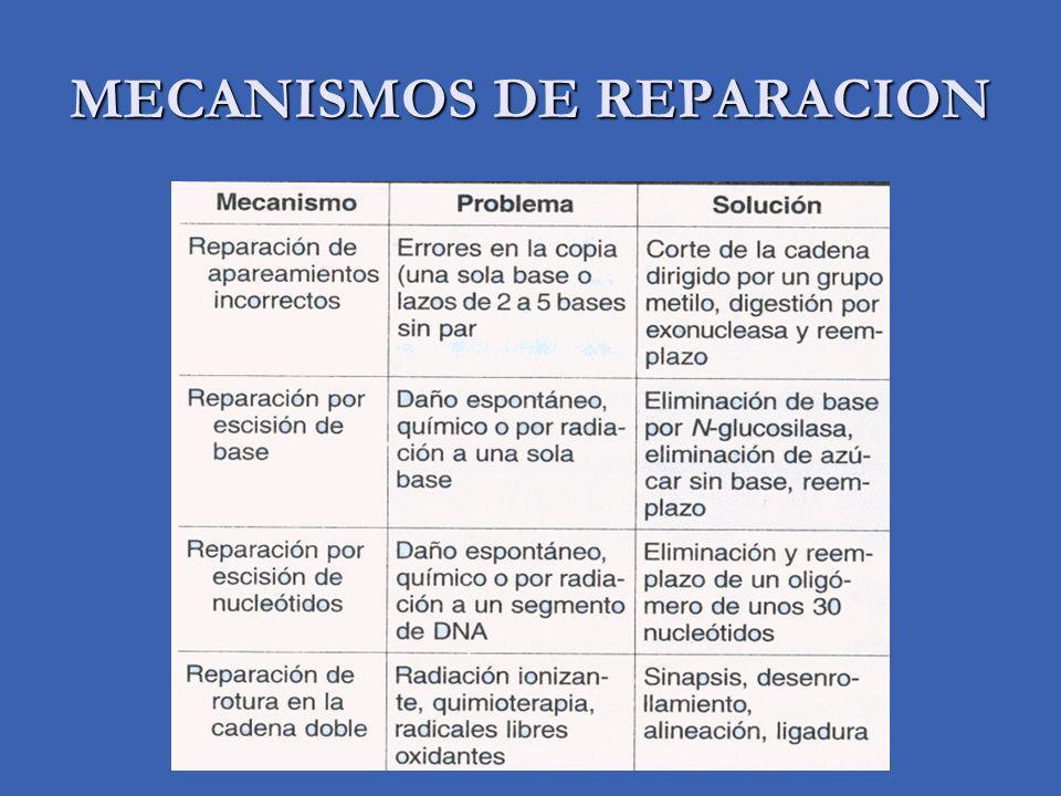 MECANISMOS DE REPARACION