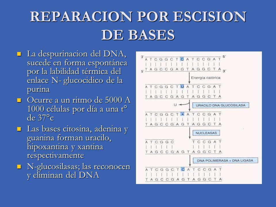 REPARACION POR ESCISION DE BASES