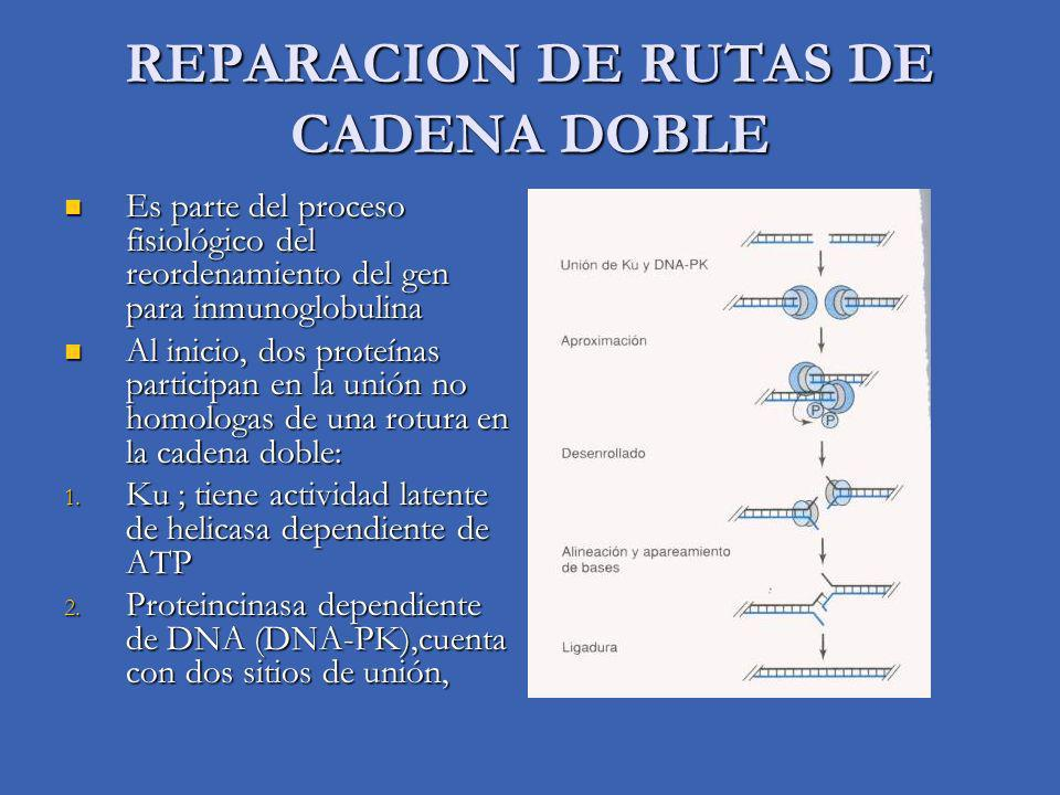 REPARACION DE RUTAS DE CADENA DOBLE