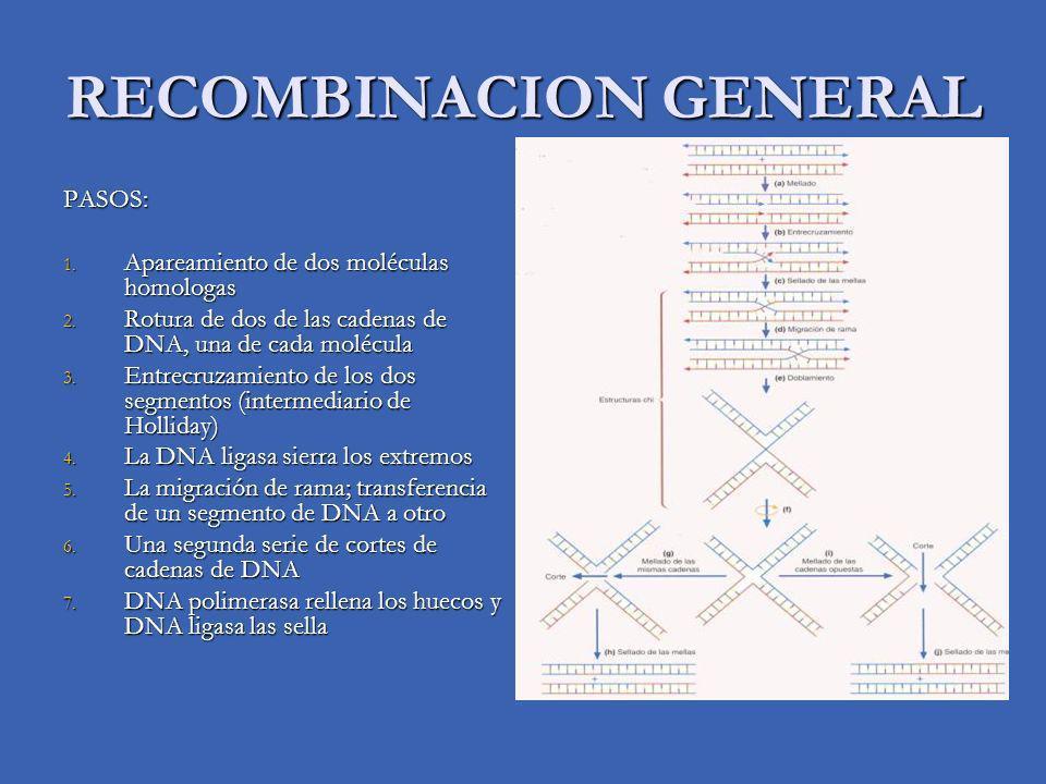 RECOMBINACION GENERAL