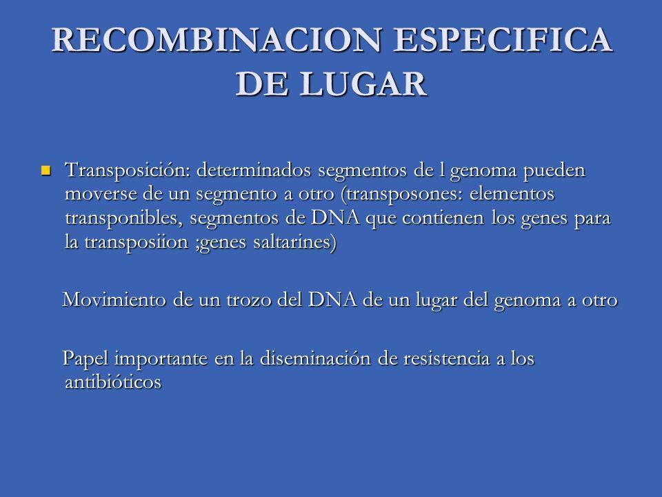 RECOMBINACION ESPECIFICA DE LUGAR
