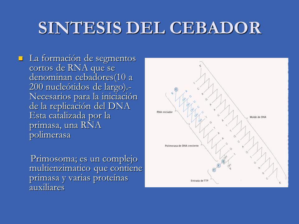 SINTESIS DEL CEBADOR
