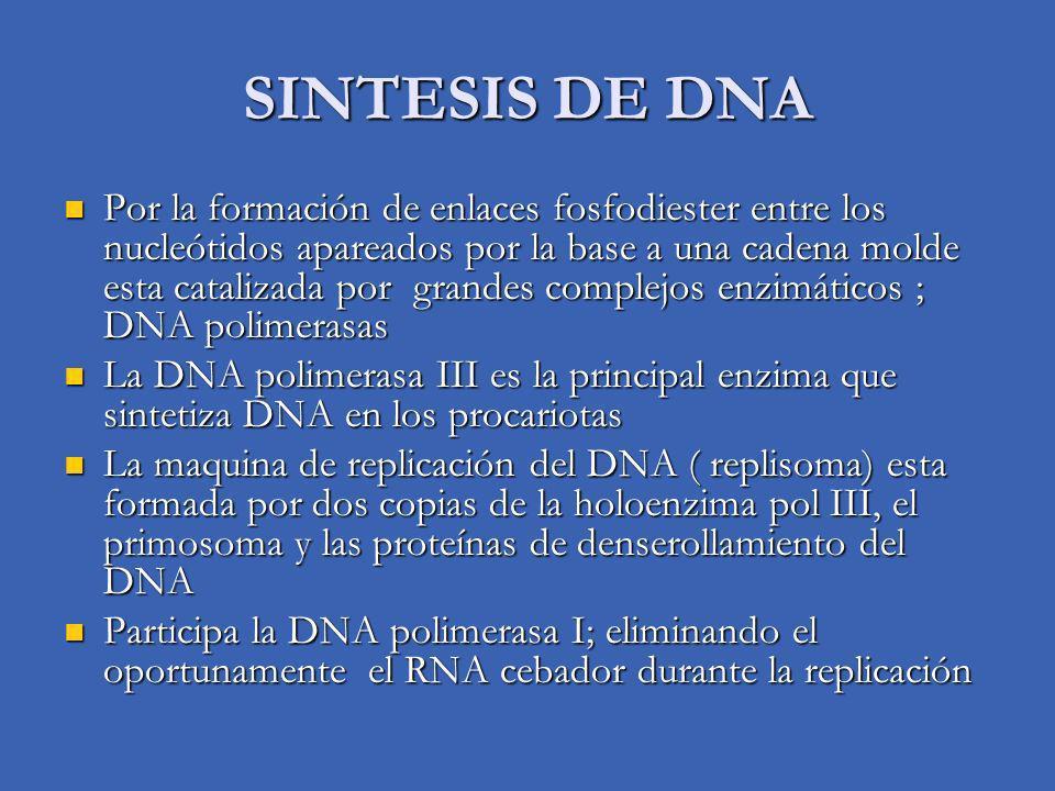 SINTESIS DE DNA