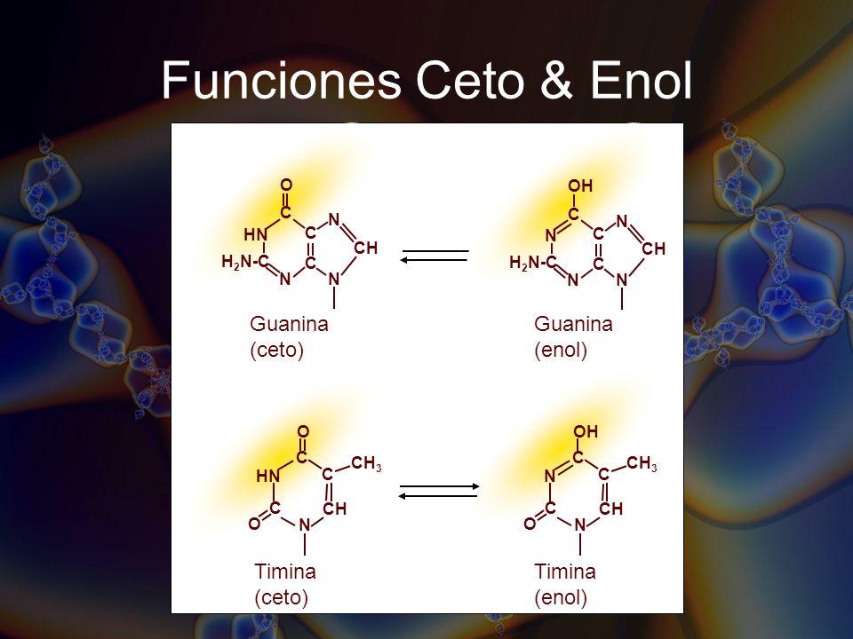 Funciones Ceto & Enol Guanina (ceto) Timina (enol) Guanina (enol)