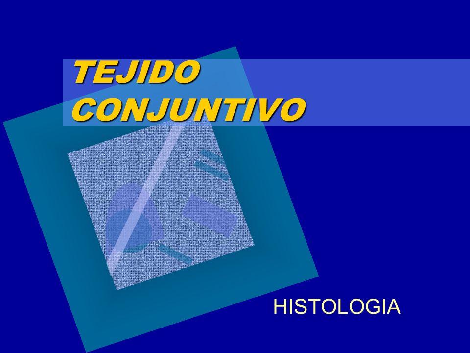 TEJIDO CONJUNTIVO HISTOLOGIA