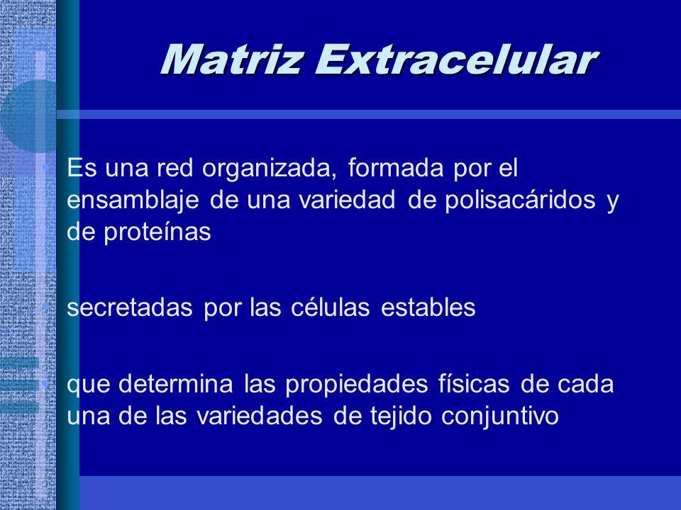 Matriz Extracelular Es una red organizada, formada por el ensamblaje de una variedad de polisacáridos y de proteínas.