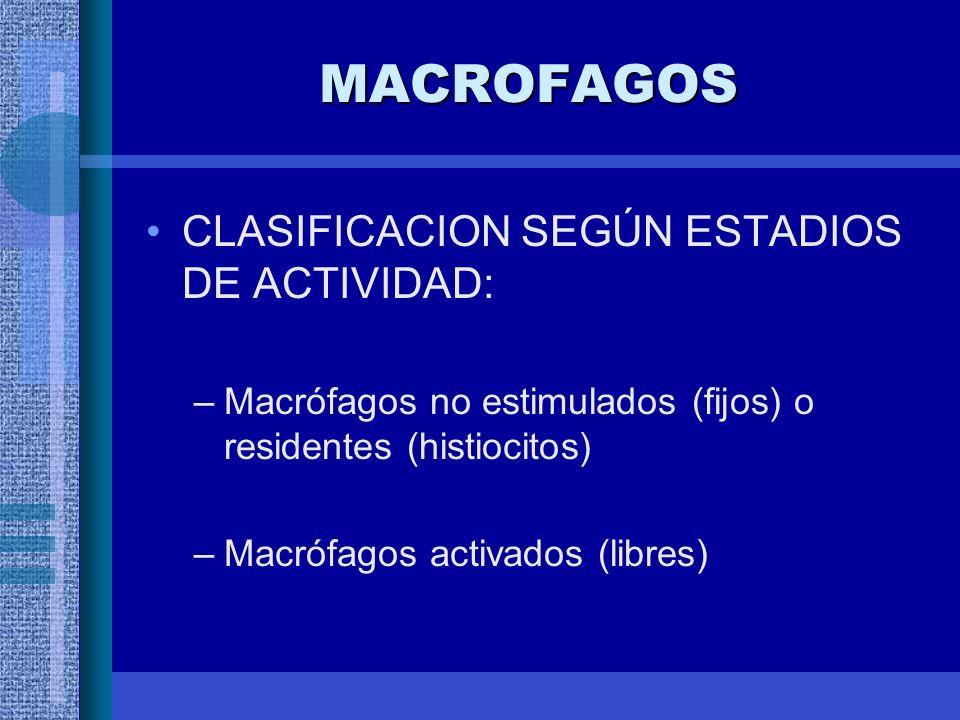 MACROFAGOS CLASIFICACION SEGÚN ESTADIOS DE ACTIVIDAD: