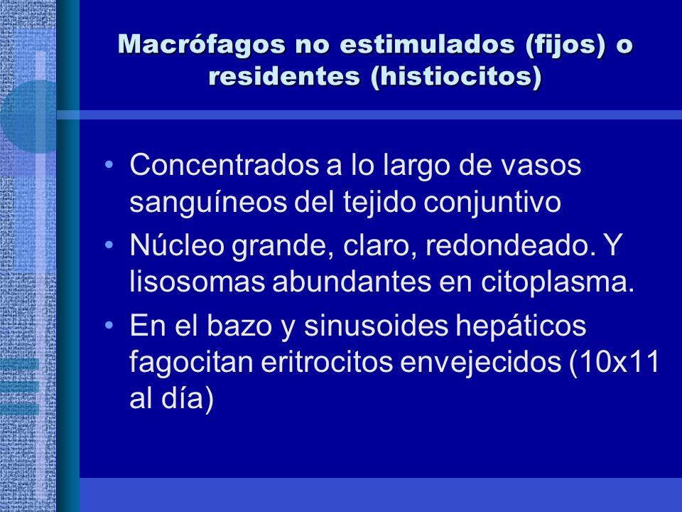 Macrófagos no estimulados (fijos) o residentes (histiocitos)