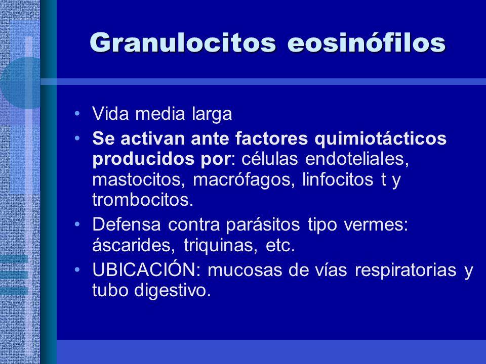 Granulocitos eosinófilos