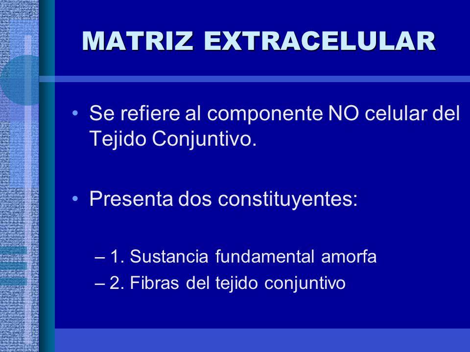 MATRIZ EXTRACELULAR Se refiere al componente NO celular del Tejido Conjuntivo. Presenta dos constituyentes: