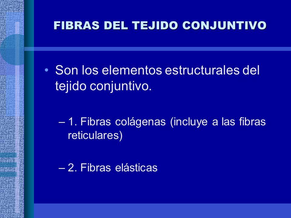FIBRAS DEL TEJIDO CONJUNTIVO
