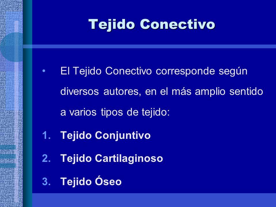 Tejido Conectivo El Tejido Conectivo corresponde según diversos autores, en el más amplio sentido a varios tipos de tejido: