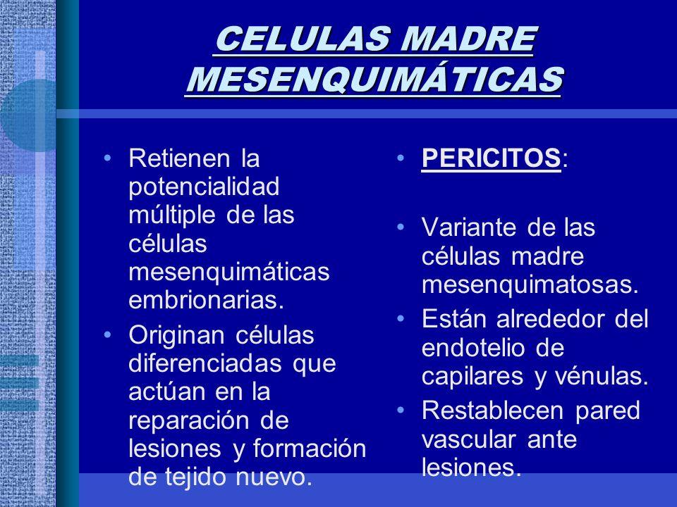 CELULAS MADRE MESENQUIMÁTICAS