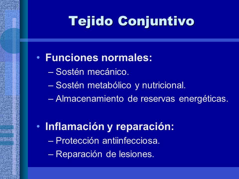 Tejido Conjuntivo Funciones normales: Inflamación y reparación: