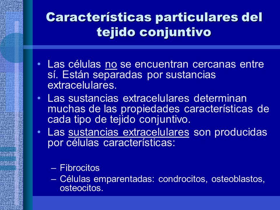 Características particulares del tejido conjuntivo