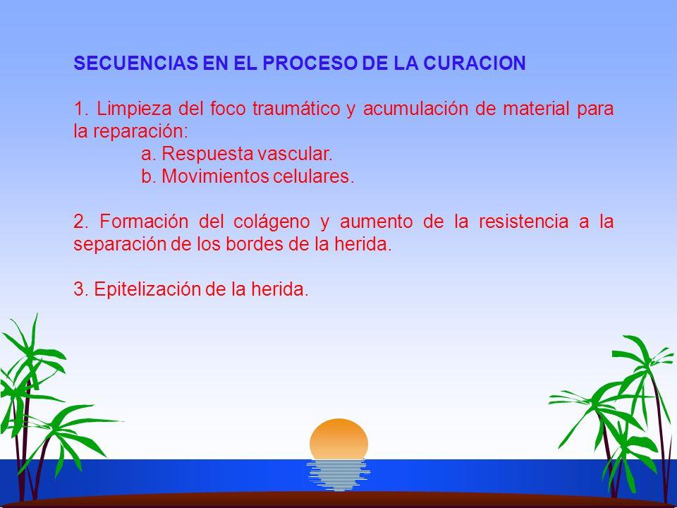 SECUENCIAS EN EL PROCESO DE LA CURACION
