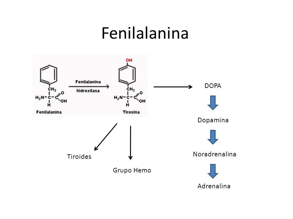 Fenilalanina DOPA Dopamina Noradrenalina Tiroides Grupo Hemo