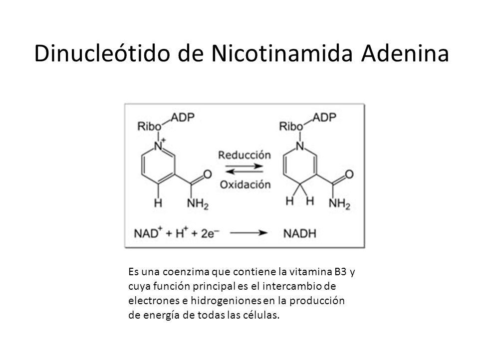 Dinucleótido de Nicotinamida Adenina