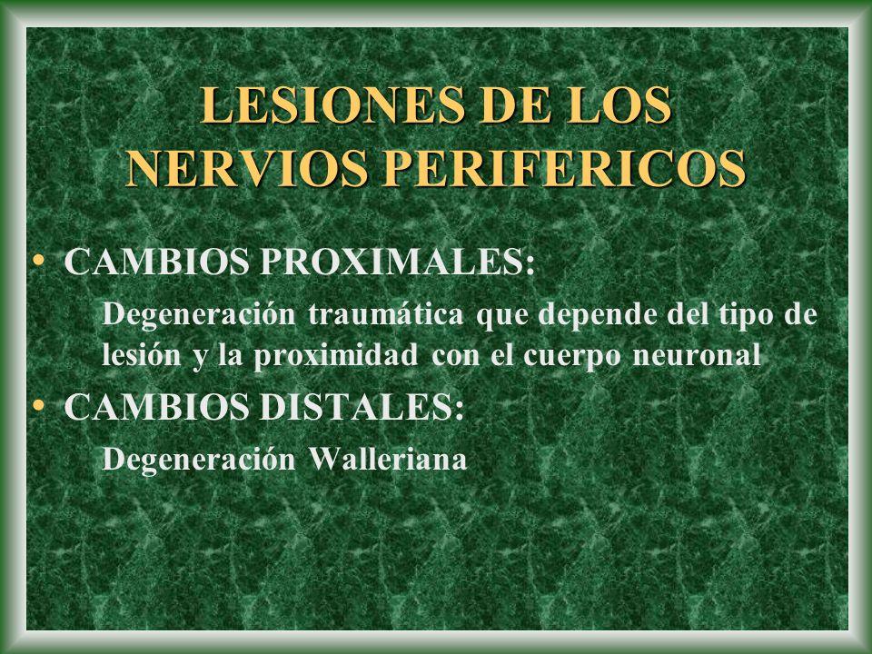 LESIONES DE LOS NERVIOS PERIFERICOS
