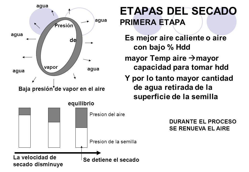 ETAPAS DEL SECADO PRIMERA ETAPA
