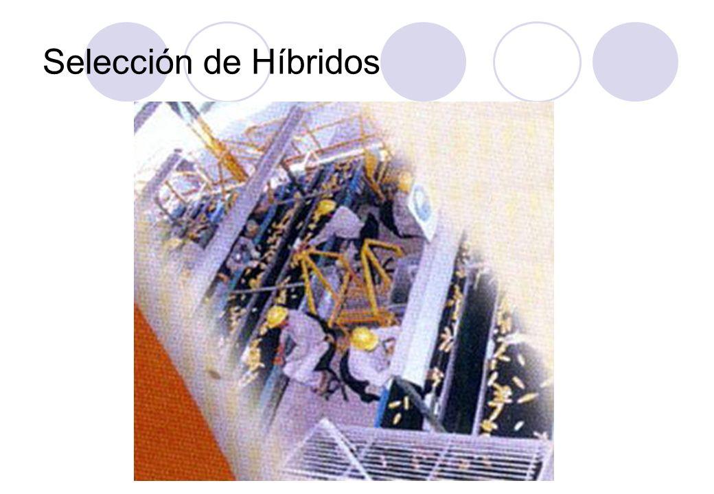 Selección de Híbridos