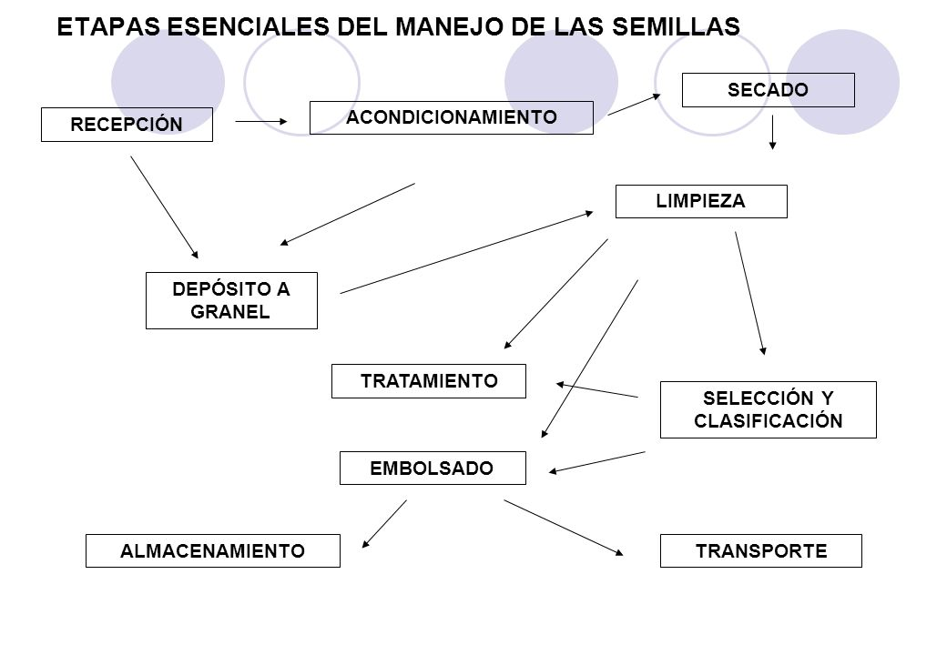 ETAPAS ESENCIALES DEL MANEJO DE LAS SEMILLAS