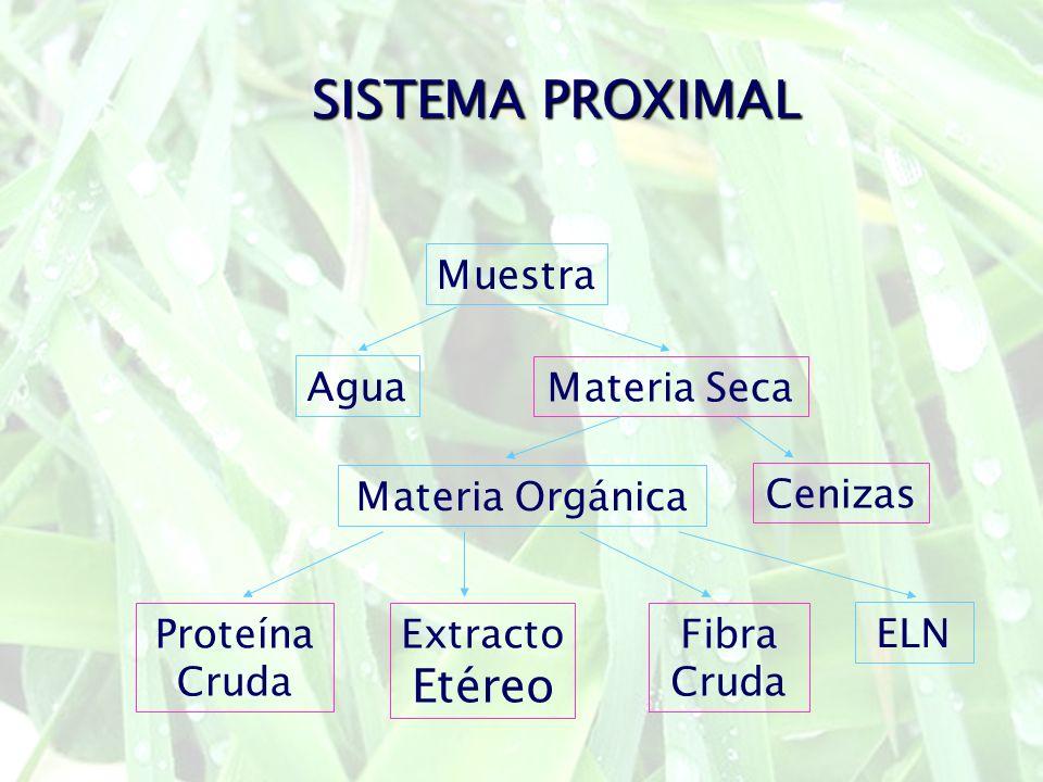 SISTEMA PROXIMAL Etéreo Muestra Agua Materia Seca Materia Orgánica