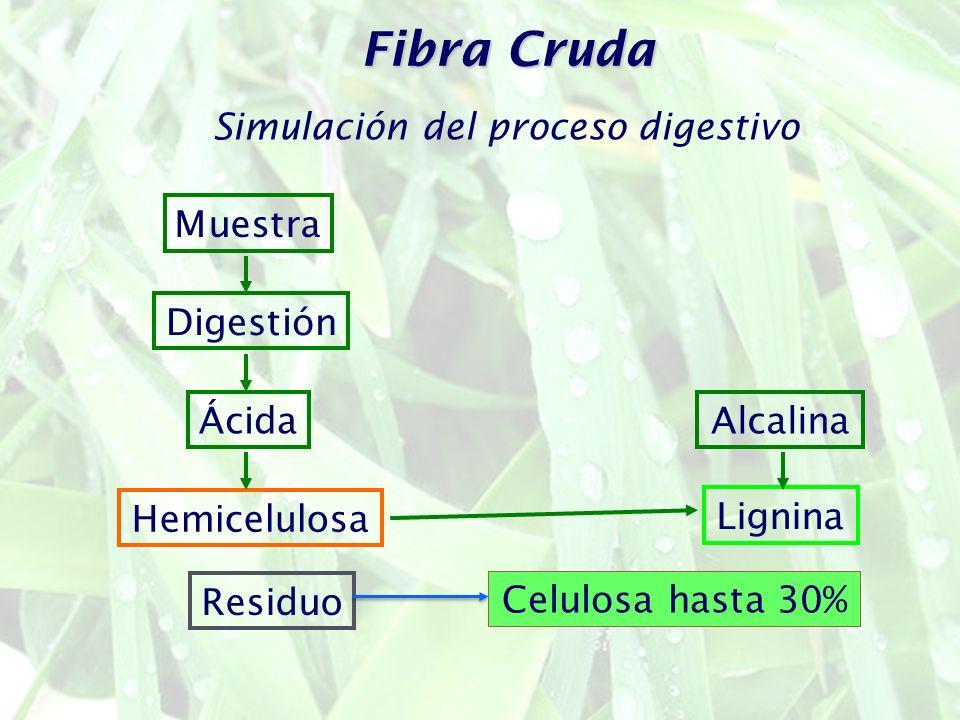 Simulación del proceso digestivo