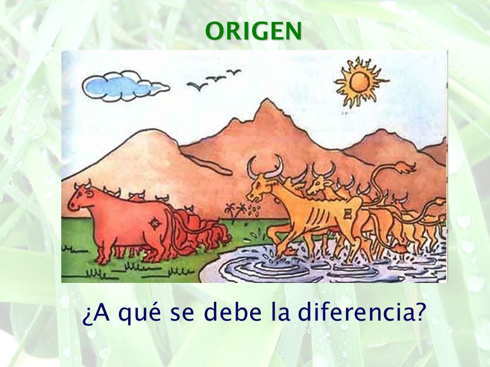 ¿A qué se debe la diferencia